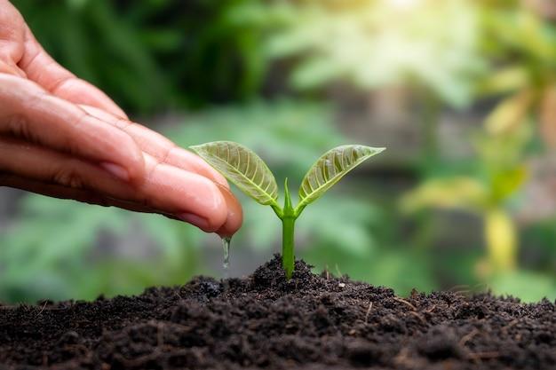 비옥한 토양에서 식물을 재배하고 물을 주는 식물 자르기 및 성장 아이디어