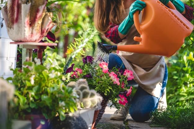 庭で水まき缶を使用して花壇に花に水をまく庭師女性。ガーデニングと花culture栽培、フラワーケア