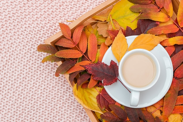 Cup of coffee with milk and colorful leaves on wood tray on pink pastel knitted plaid