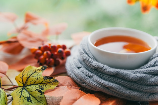Cup in knitted scarf with autumn leaves