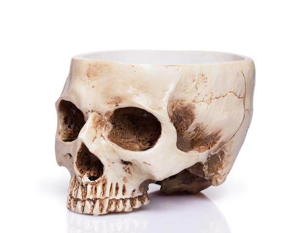 Чашка человеческого черепа, изолированные на белом фоне