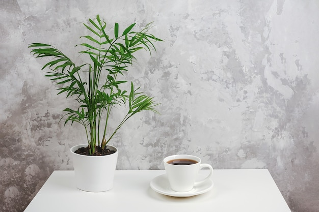 灰色の石の壁に逆らってテーブルの上の白い鍋にコーヒーと自家植物のカップ。コピースペース最小限のスタイル。コンセプトコーヒータイム。正面図。