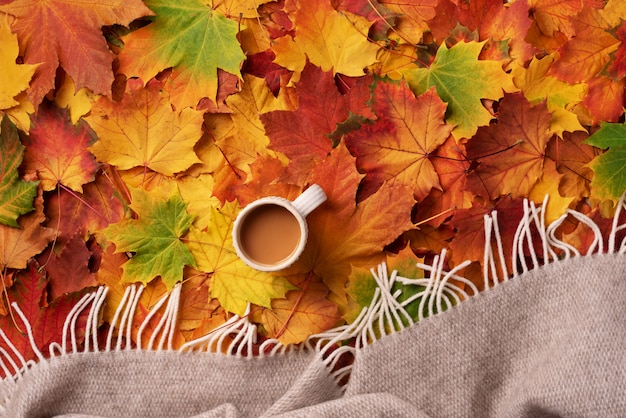 Cup of warm drink, beige plaid over colorful maple leaves background.