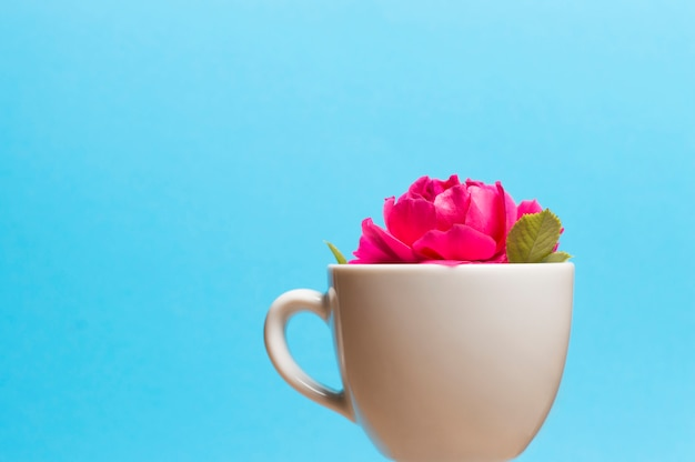 Cup with flower inside on blue background
