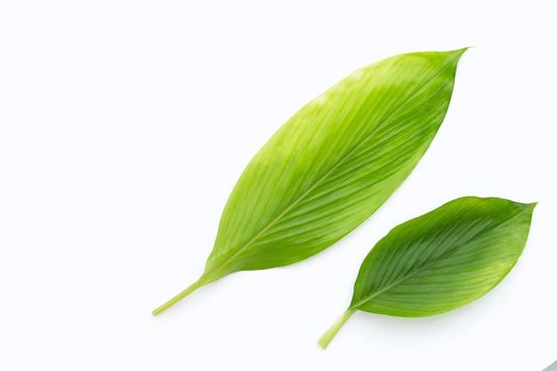 Curcuma comosa 흰색 배경에 나뭇잎.