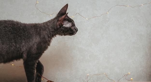 Любопытный кот смотрит на световые струны