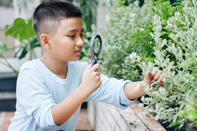 Curious asian boy with magnifying glass looking at leaves of bush in backyard