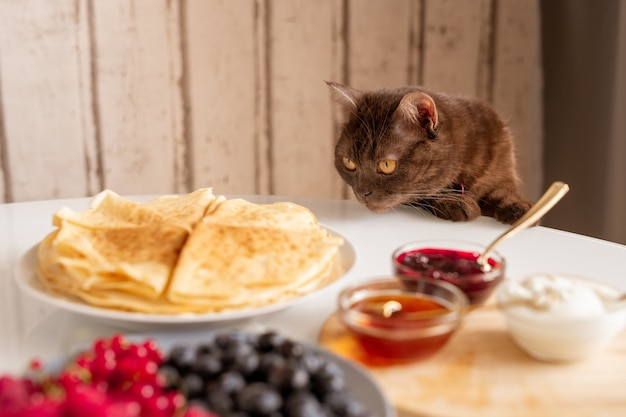 Curious brown cat smelling appetizing pancakes while bending over table served with homemade food for breakfast in the kitchen Premium Photo