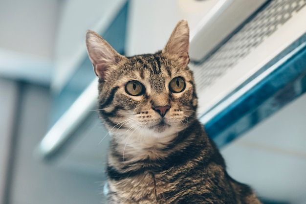 Любопытный кот дома, удивленный кот, любопытный, настороженный