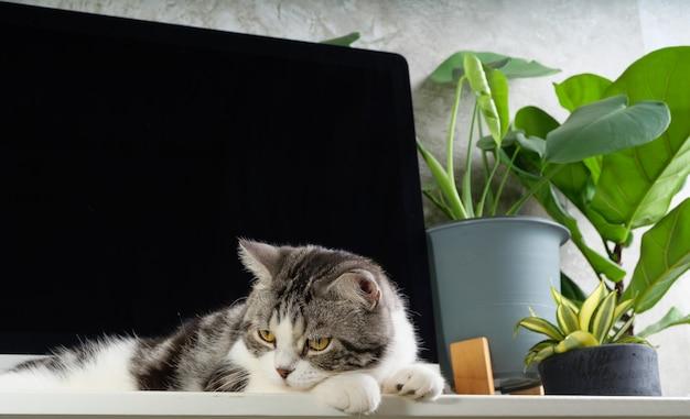 Любопытный кот на рабочем столе с компьютером и тепличным растением монстера на белом столе, концепция работы из дома