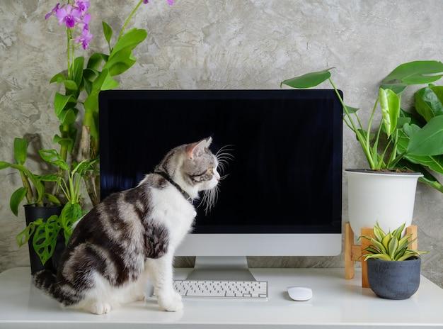 Любопытный кот на рабочем столе с компьютерными цветами орхидеи и парниковым растением монстера на белом столе, концепция работы из дома