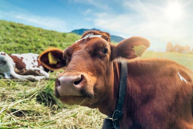 카메라를 보고 들판에서 호기심 많은 소