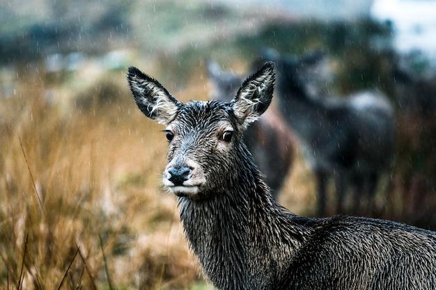 カメラを見て好奇心が強い鹿