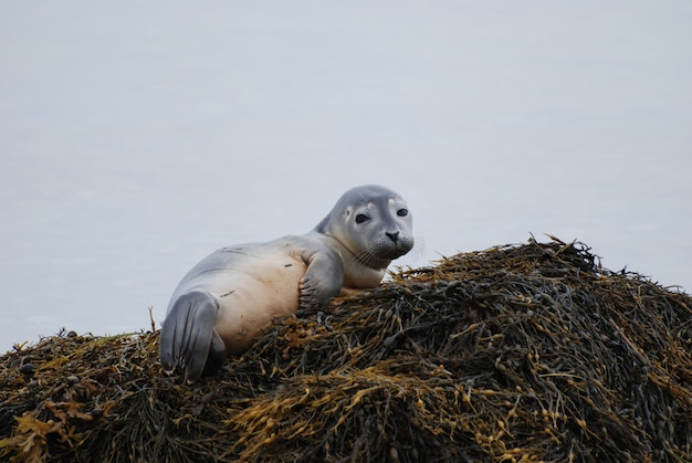 Curious expression on the face of a baby harbor seal