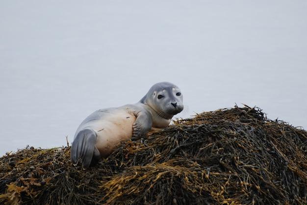아기 항구 바다표범의 얼굴에 호기심 많은 표정