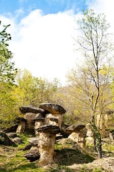 イタリア、ピエモンテ地方、クネオ市に近い好奇心旺盛な森。森の名前は「ciciu」の森で、最終氷期の結果です。