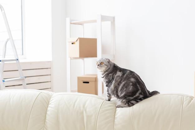 好奇心旺盛な灰色のスコティッシュフォールド猫が引っ越し後に新しいアパートを探索しています。アパートでの動物の生活と猫の世話の概念。