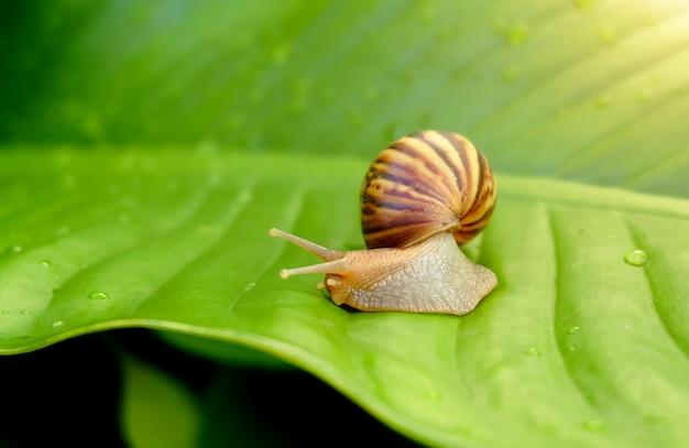 Curious snail on green leaf