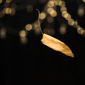 カールした秋の落ち葉