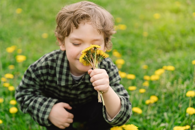 곱슬 소년은 민들레 꽃을 수집하고 냄새를 맡습니다.