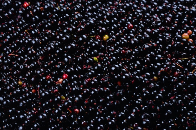 Currant black. ecological berries for desserts, smoothie or jam. currant organic berries.