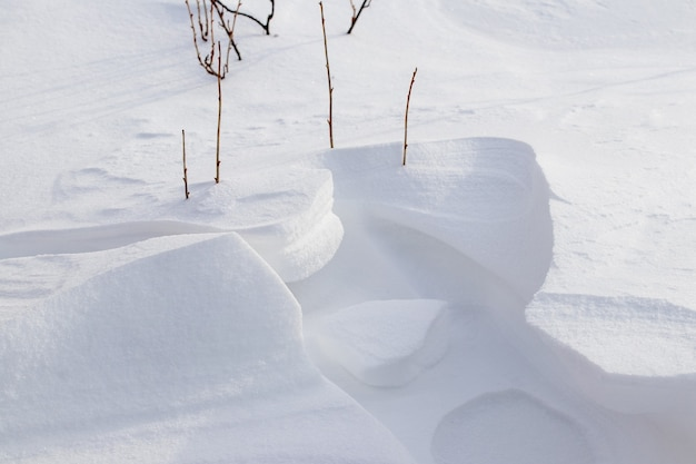 눈 덮인 정원의 건포도 부시, 겨울 정원