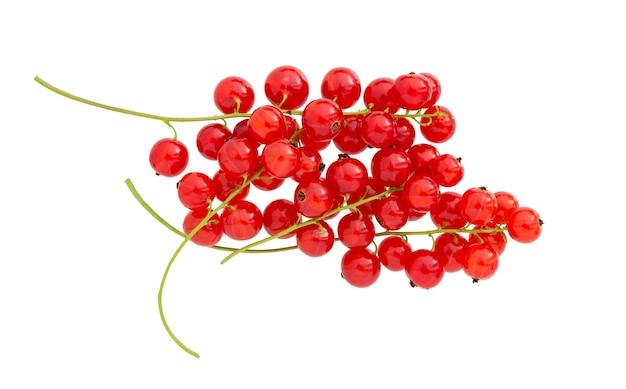 Смородина, изолированные на белом фоне. свежая красная ягода смородины. ветка красной смородины.