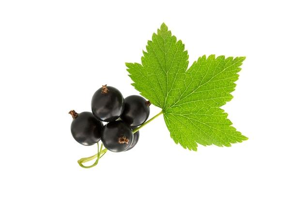 Смородина с зелеными листьями, изолированные на белом фоне. свежая черная ягода смородины. ветка черной смородины.