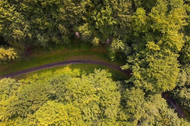 真上からの夏の自然の中の林道のカーブ
