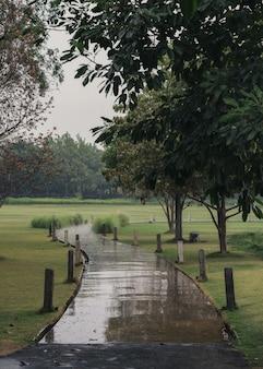 雨の日の緑豊かな公園の曲がった小道