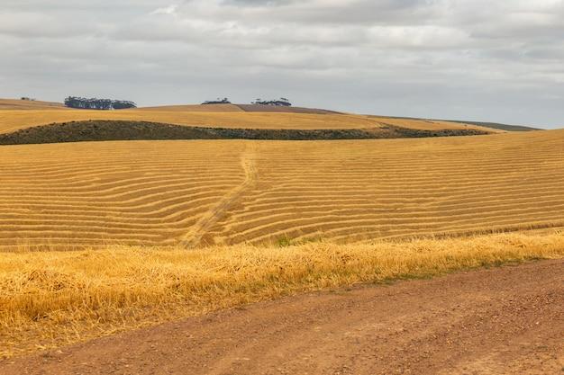 曲線の田舎道と春の南アフリカ共和国のフィールド