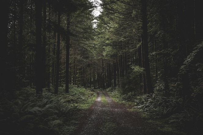 Curvy narrow muddy road in a dark forest surrounded by greenery and a little light coming from above