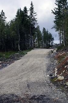 ノルウェーの美しい緑の木々に囲まれた曲線道路