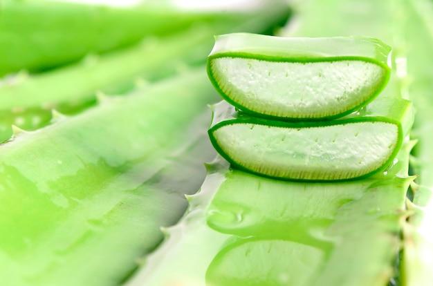 녹색 배경에 알로에 베라 잎을 잘라.