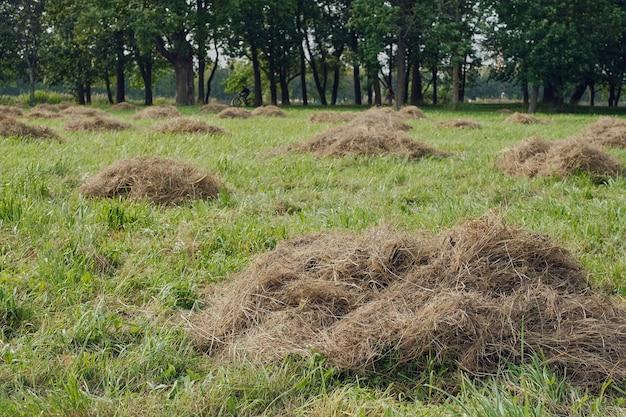 動物飼料用の草を刈り取り、乾燥させます。クローズアップ、選択的な焦点、農業用の乾草干し草の山。公園で草を刈り、景観を大切にする