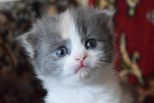 Cut baby kitten