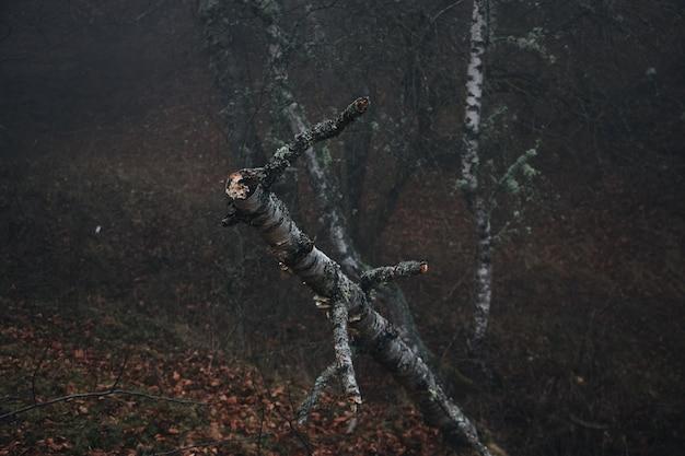 秋の森で木の枝を切る