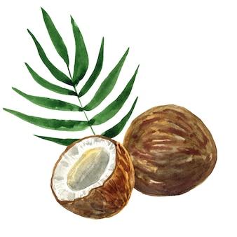 ココナッツと葉を切ります。手描きの水彩イラスト。孤立。
