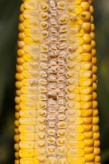果汁で覆われたトウモロコシの穂軸、内部構造および黄色い穀物の構造をカットします