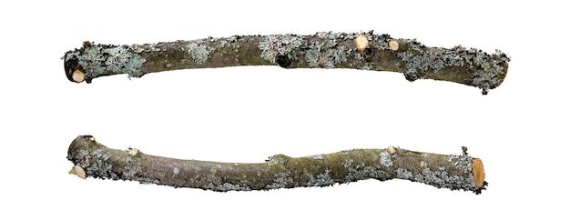 リンゴの木の曲がった枝を2つの視点で切り取り、地衣類と苔で覆われた薄い樹皮で覆い、白い背景で隔離します。