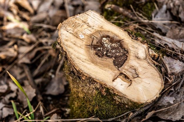 森の中の低木を切り倒す