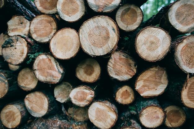 Срубленные стволы деревьев лежат в лесу