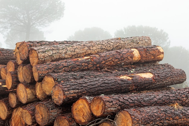 Cut logs for firewood stacked in the forest during a foggy and rainy day