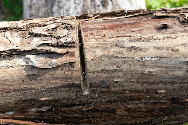 Распил по бревну - небольшой срез на дереве во время его обработки, упор на распил, малая степень свободы