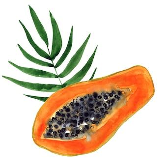 Порежьте папайю и лист. тропический фрукт. ручной обращается акварель иллюстрации. изолированный.