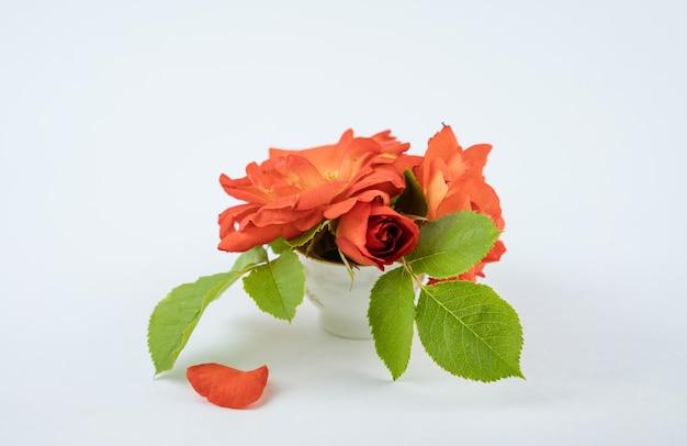 작은 흰색 세라믹 꽃병에 분홍색 장미 꽃을 자른다