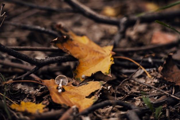 秋の金のカエデの葉の上に小さなキノコを切ります。