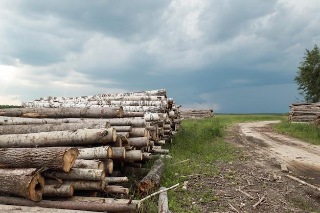 Скошенные бревна срубленных деревьев