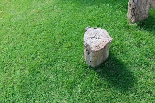 녹색 잔디 필드에 나무를 잘라. 배경 복사 공간 그 루터 기. 자연과 환경 개념