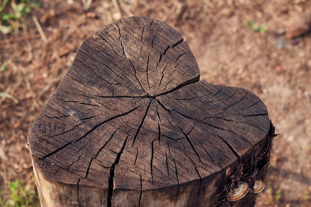Cut tree stump with heart shape textured wooden background